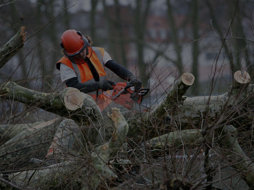 Salem Tree Service